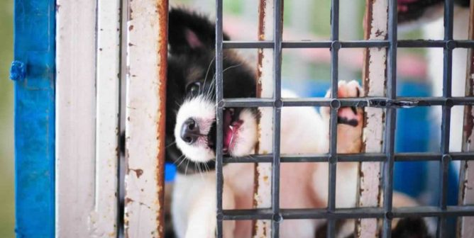 Why Are Those Who Push 'No-Kill' So Silent on Sham Hoarder 'Rescues'?