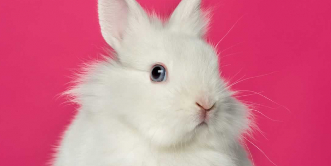 1 Year Later, How Have PETA Scientists Helped the EPA End Tests on Mammals?