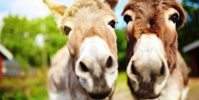 PETA Makes It Quick and Easy to Help Donkeys