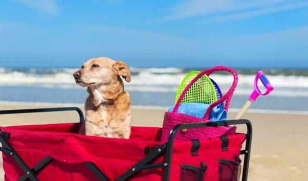 Dog at ocean sitting in cart full of toys