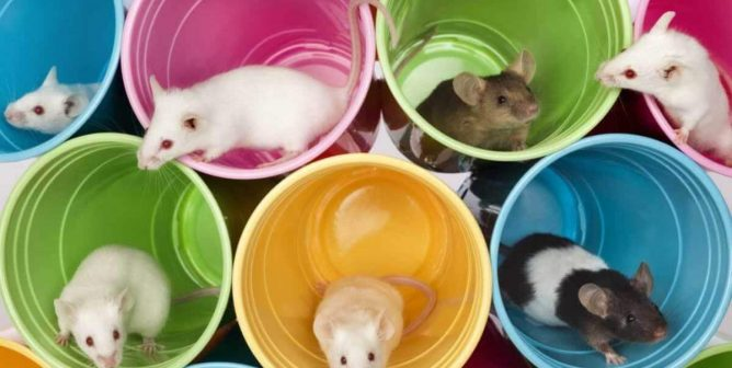 Governor Signs California Cruelty-Free Cosmetics Act!
