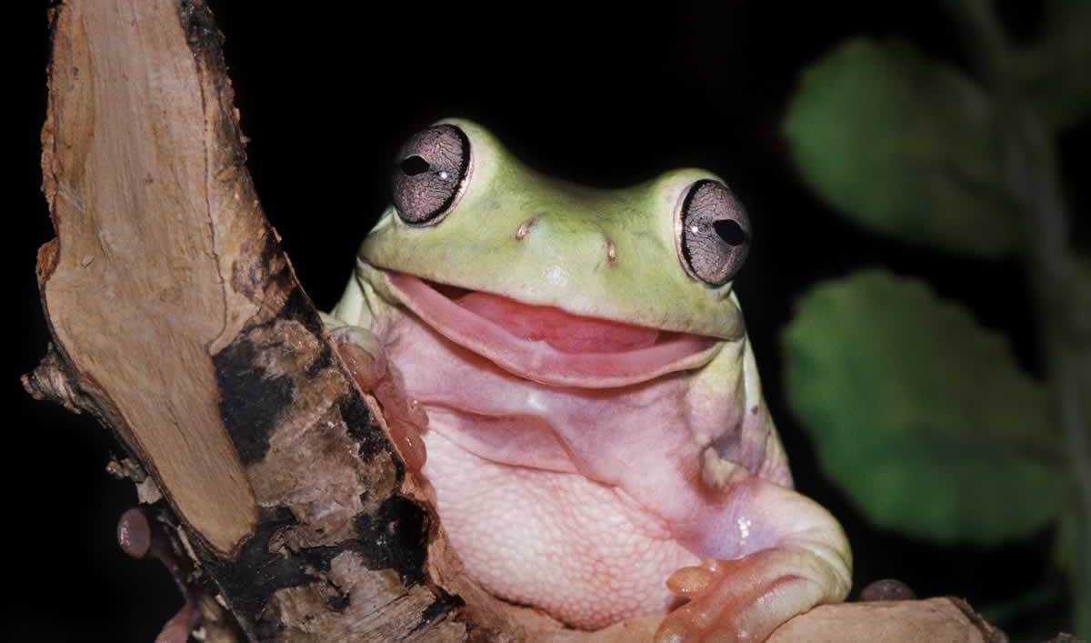 Smiling frog on tree branch