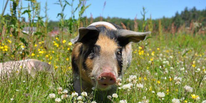 National Defense Authorization Act Includes Landmark Animal-Protection Provision