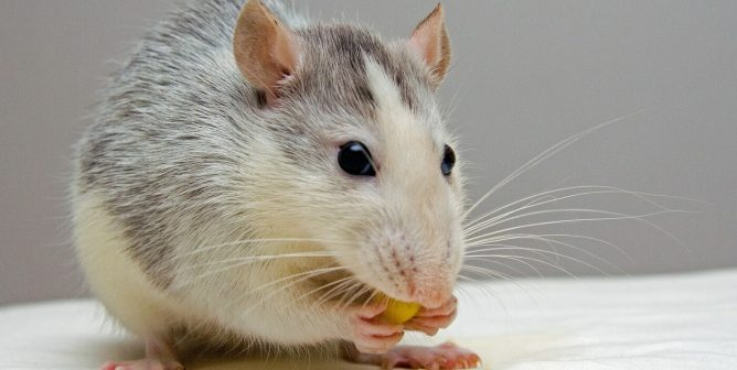 Keep Up With PETA's Effort to End NIH's Funding of Pointless Experiments on Animals