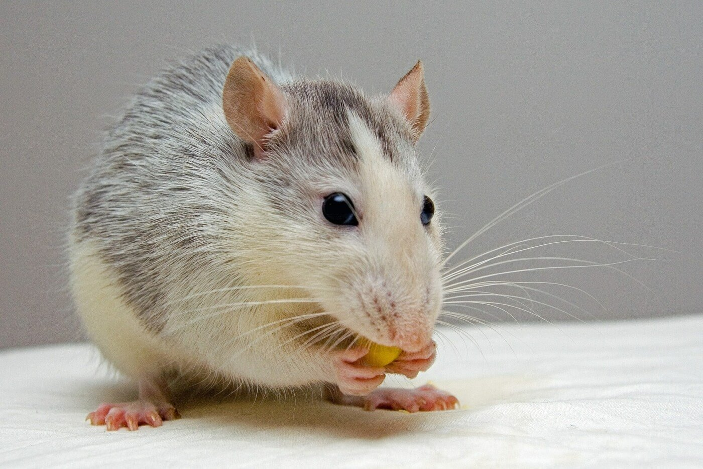 PETA Gets Food Giant General Mills to End Animal Experiments