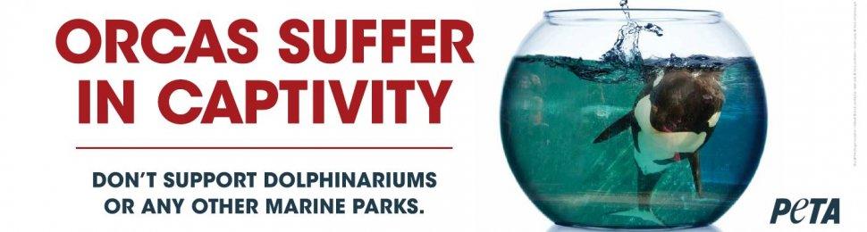 Orcas Suffer in Captivity