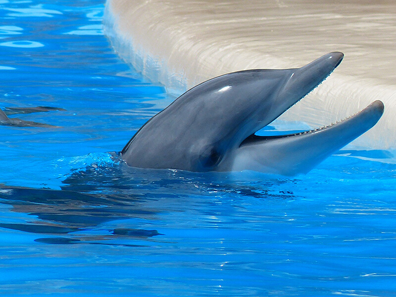 PETA Exposes SeaWorld's Sexual Abuse of Dolphins