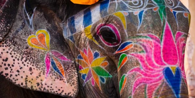 PETA India Goes to Rajasthan High Court to End Illegal Elephant Rides in Jaipur
