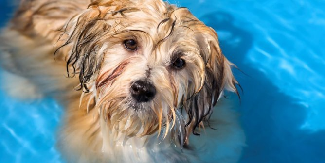Natural Pet Remedies for Flea and Tick Control | PETA