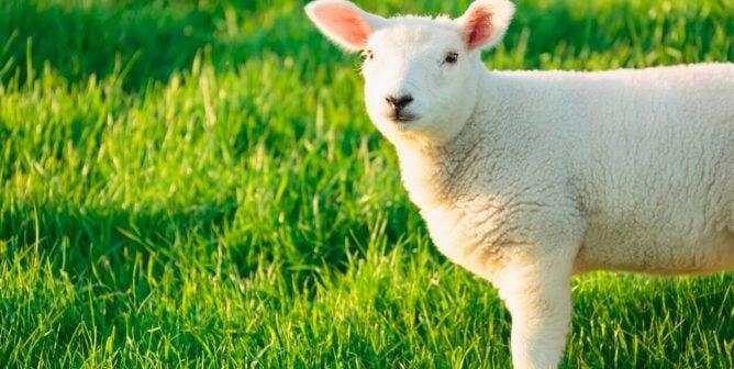 PETA's Vegan Clothing Shopping Guide