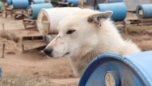 Discover Holidays: Stop Supporting the Dying Dog-Sledding Industry!