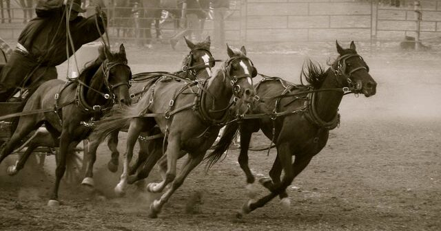 6 Horses Dead: Take Action Now to End Calgary Stampede's Chuckwagon Racing!