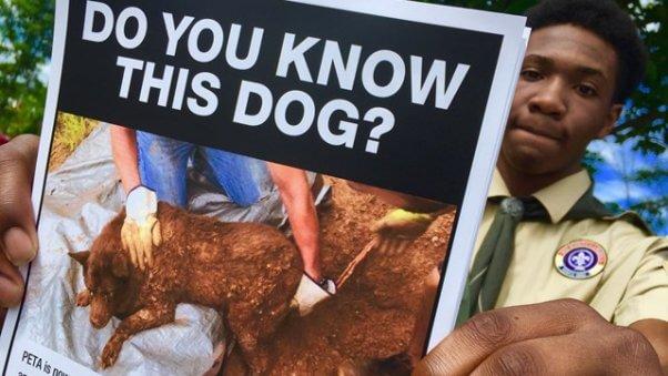 boy scouts, peta reward, lulu, dog buried alive