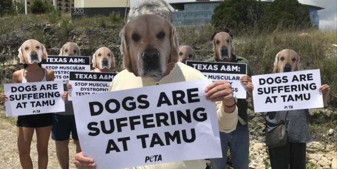 R.I.P., Ned: PETA Exposes One Dog's Death at Texas A&M