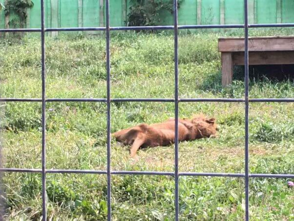PETA files lawsuit over treatment of animals at Tri-State Zoo