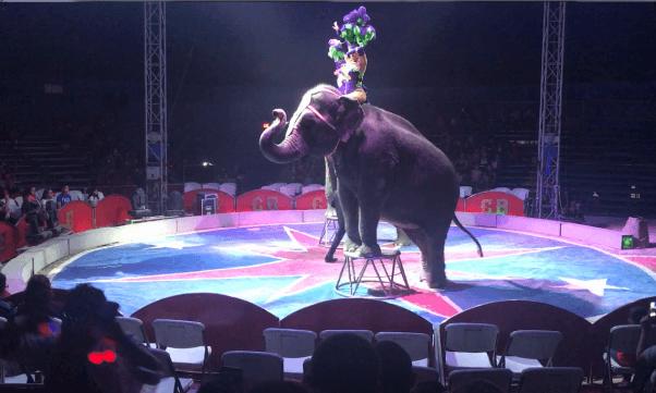 carson & barnes, circus, elephant
