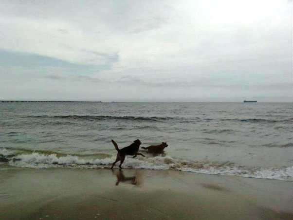 happy dog, dog on beach, PETA dogs, Sunny