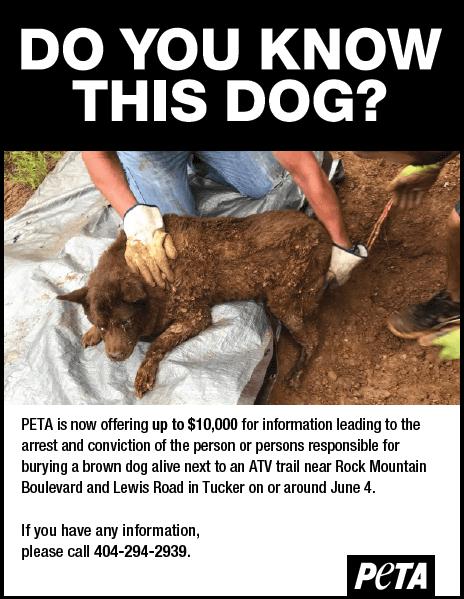 PETA Reward Reaches $10000 in Search for Dog Torturer