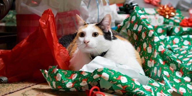 Animal-Friendly Holiday Décor
