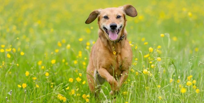 Finding the Right Home for Your Companion Animal