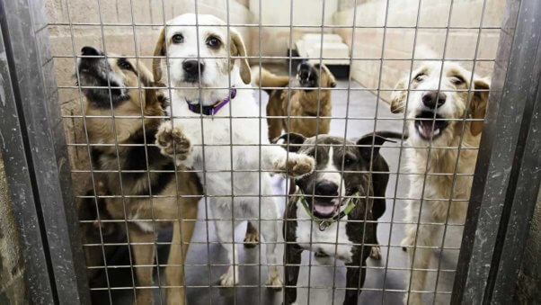Five dogs behind door of kennel in shelter