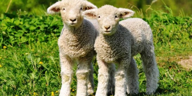 16 Things You Need to Know About Wool