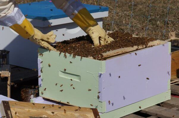 Here's What's Killing Bees—and What You Can Do | PETA
