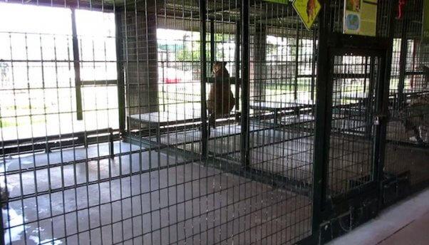 big cat cage at big cat habitat