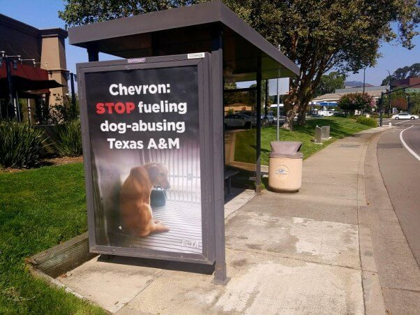 chevron, texas a&m university, tamu, muscular dystrophy, experiments on dogs
