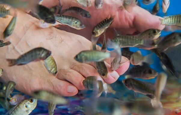 Considering a fish pedicure be willing to lose your nails for Fish eating dead skin pedicure