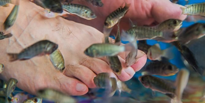 Fish Pedicures: The Ugly Side of the 'Beauty' Service | PETA