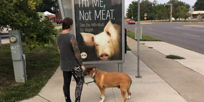 Just in Time for the Iowa State Fair, PETA Ads Proclaim, 'I'm ME, Not MEAT'