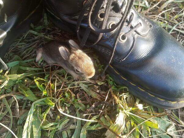 tiny bunny next to vegan Doc Marten boot