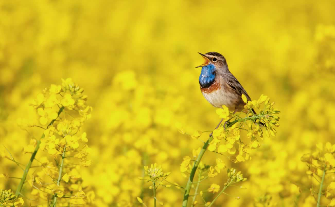Your Garden: A Sanctuary for Yourself and for Birds