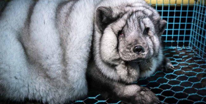 Urge Wish.com's Parent Company to Ban Fur