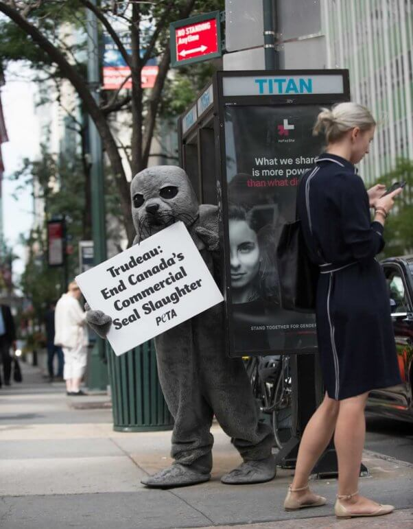 PETA seal trailing Justin Trudeau in NYC