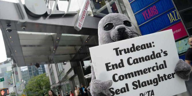 Watch PETA's 'Seal' Trail Justin Trudeau Through New York City