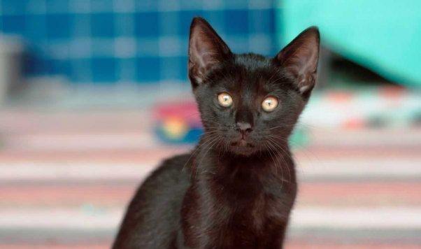 Cute black kitten rescued from Hurricane Harvey