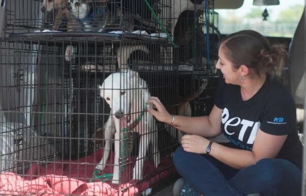 PETA staffer petting white dog in van