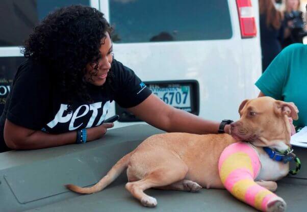 PETA staffer petting cute brown dog with leg in cast