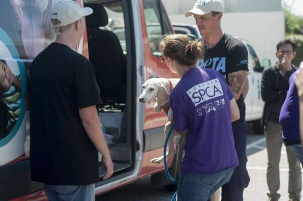PETA and SPCA staffers getting animals out of van