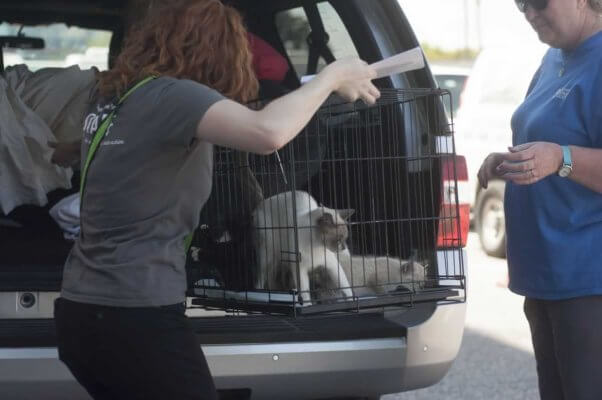 Unloading cage of cats from van
