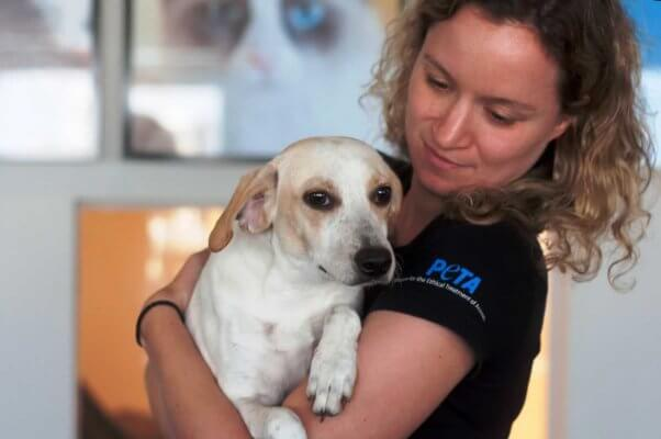 Sweet cream-colored dog being held by PETA staffer