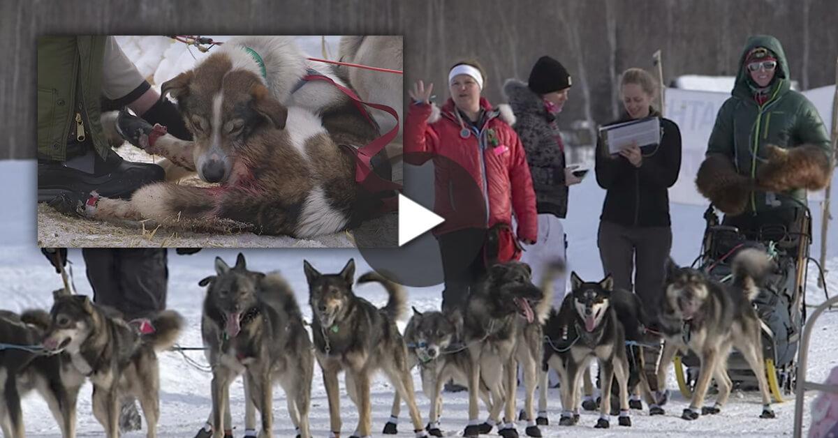 Iditarod prizes
