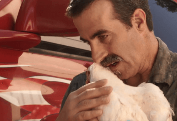 truck drivers rescue of lucky the chicken from slaughterhouse truck