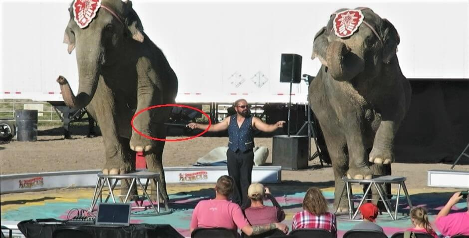 Crippled Elephants At Garden Bros Circus Are Why Animal Acts Must End Peta