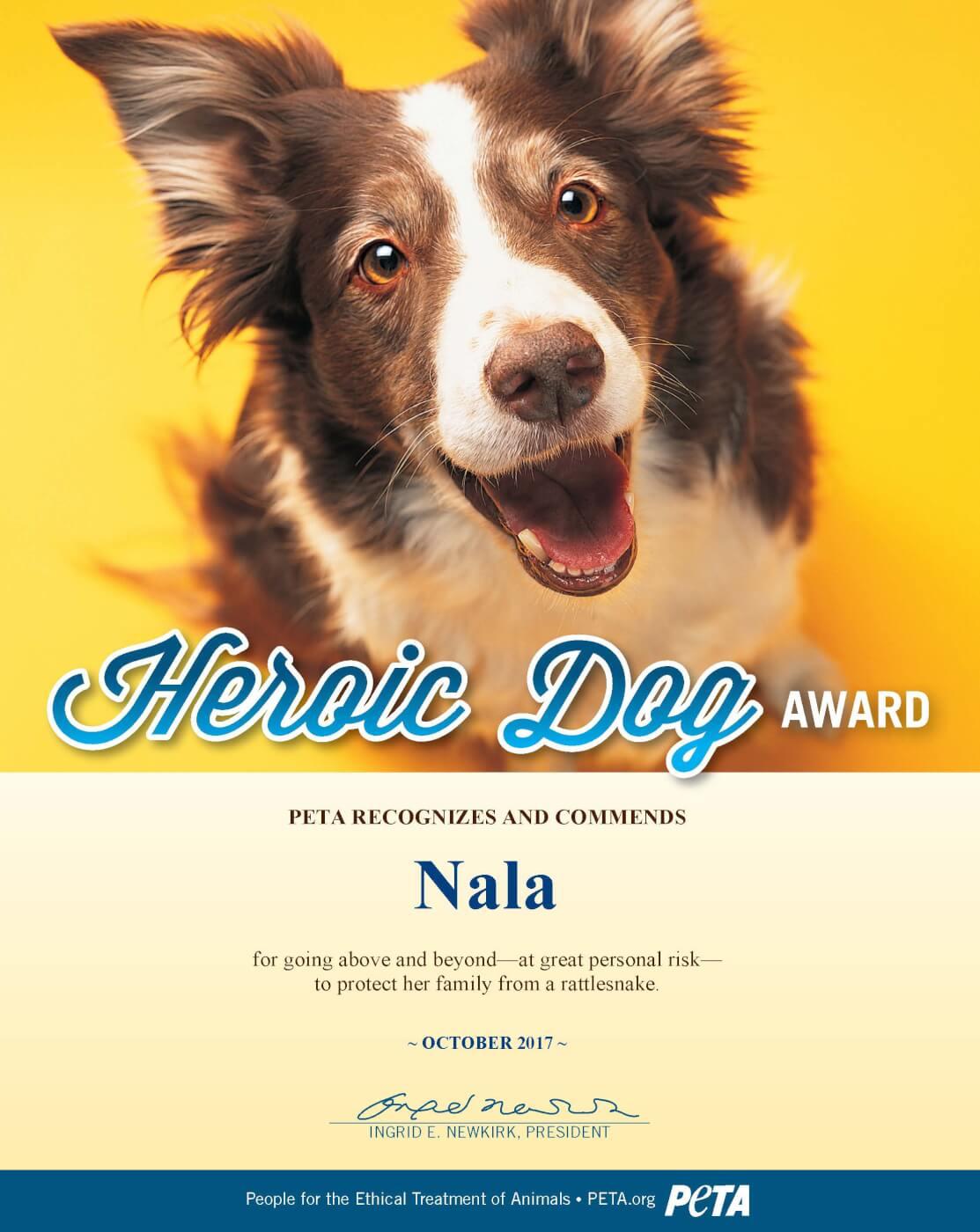 Heroic Dog Nets PETA Award for Saving 10-Year-Old Boy From Rattlesnake | PETA