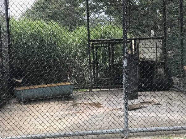 Bear enclosure at Wilson's Wild Animal Park