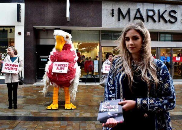 peta uk, down feathers demo, plucked goose