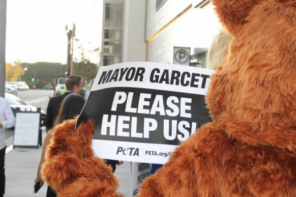 """Protester dressed as cat holds sign reading, """"Mayor Garcetti, please help us"""""""